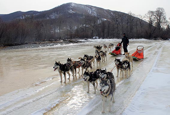 how to build a dog sled