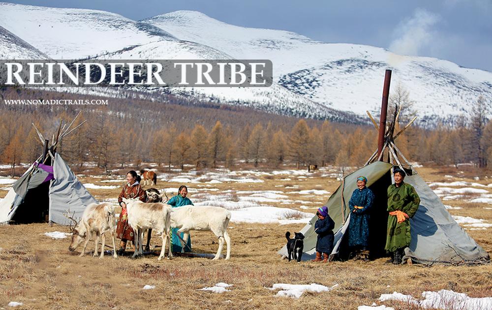 Reindeer Tribe