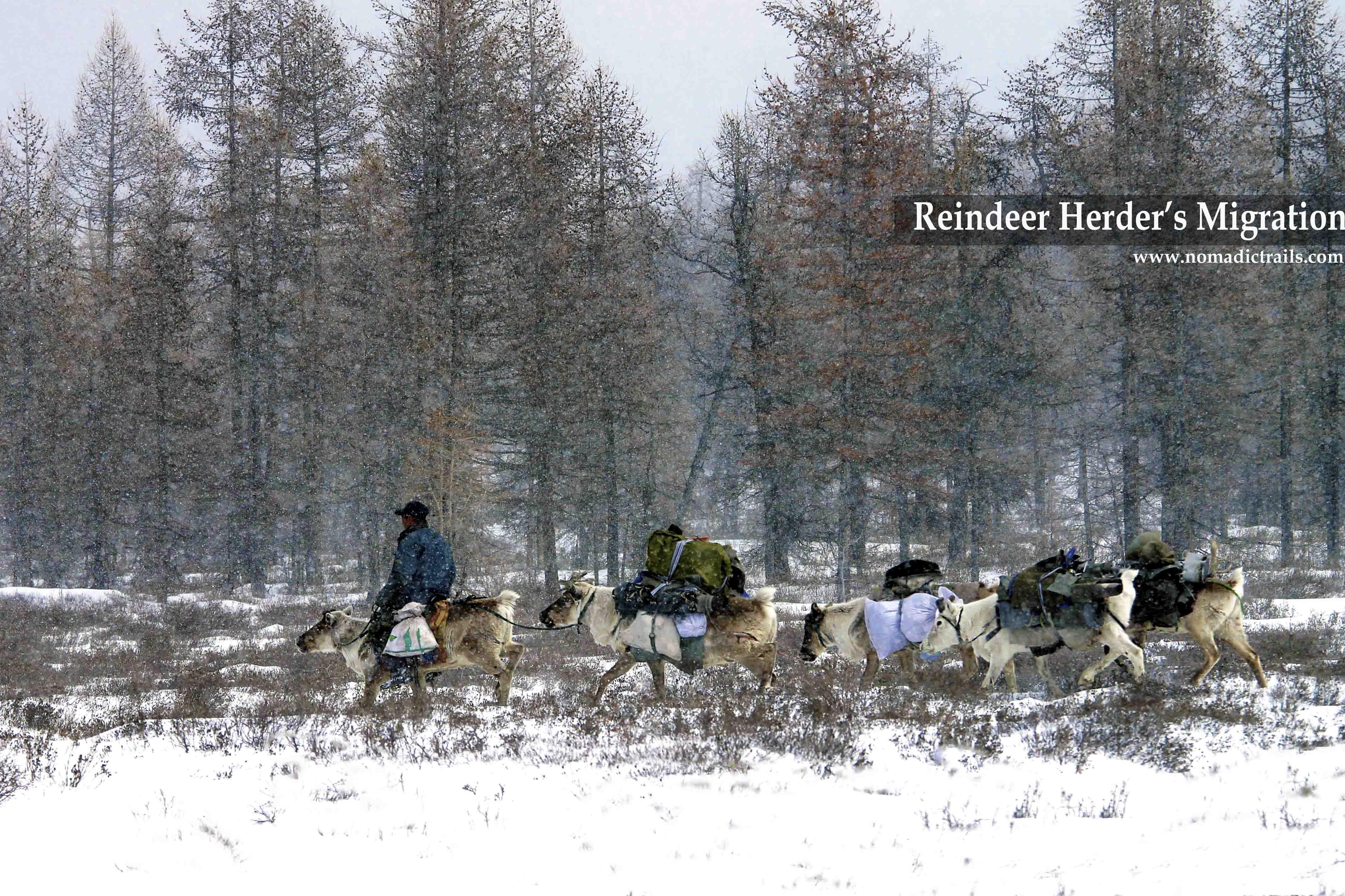 Reindeer herder's Migration