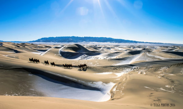gobi-in-winter