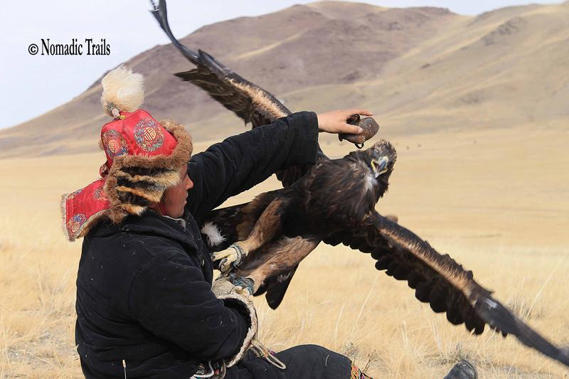 Golden-eagle-refuses3