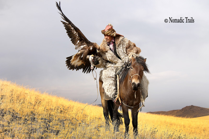 Golen-Eagle-Posing