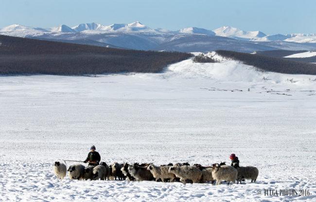herder-boys1