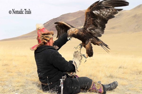 Golden eagle refuses4