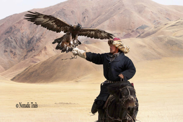 Rider-with-Golden-eagle3