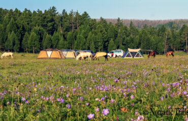 camp-wityh-flowers