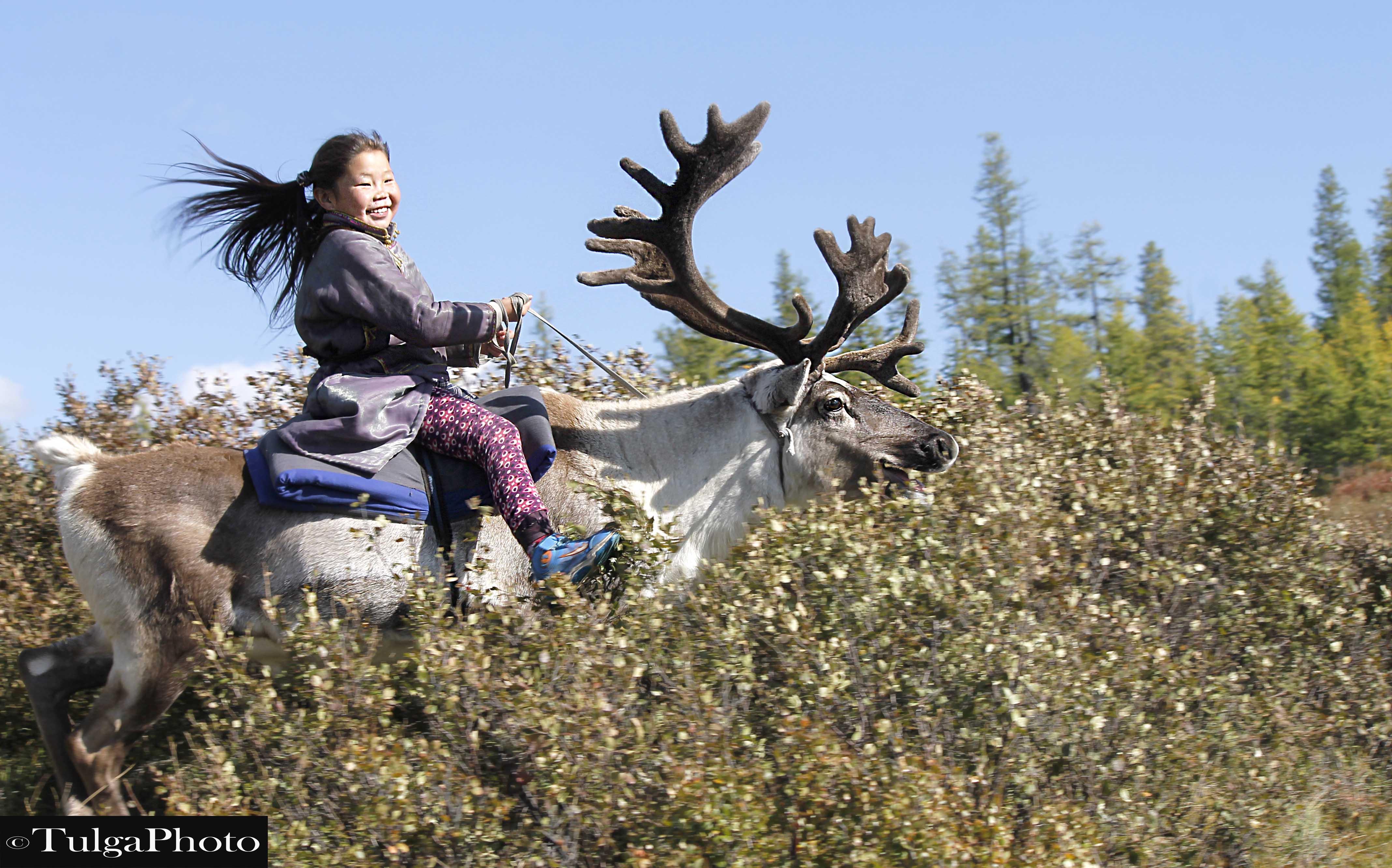 Maralaa Reindeer herder