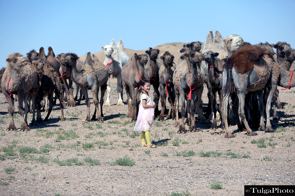 Girl with camels