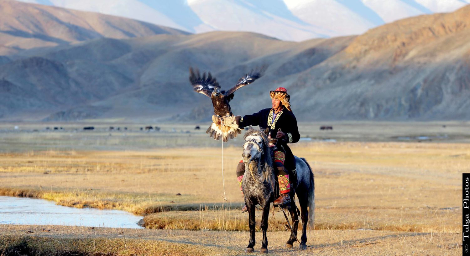 Golden Eagle Festival- Golden Eagle Hunter- Master