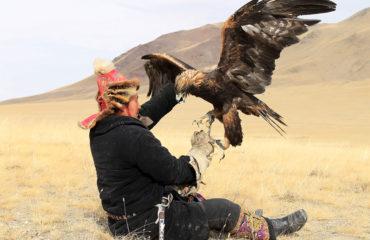 Golden-eagle-refuses4-1