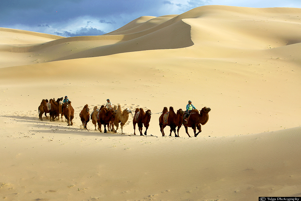 Camel riders on Khongor Sand Dunes