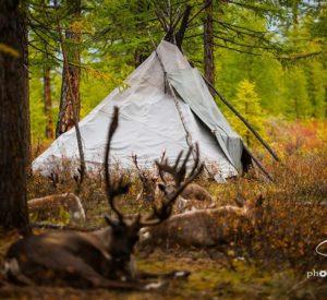 teepee in autumn camp of Tsaatan Reindeer Herders Mongolia
