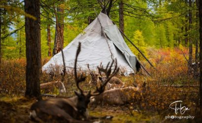 teepee in autumn camp of Tsaatan Reindeer Herders Mongolia