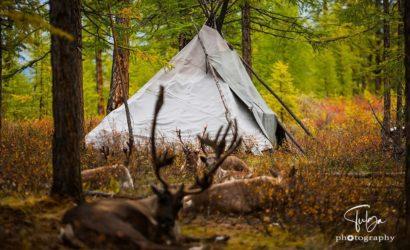 Autumn camp