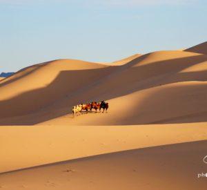 Gobi with camel