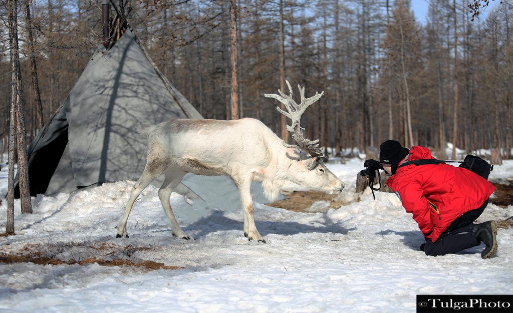 Reindeer Photography Tour Winter