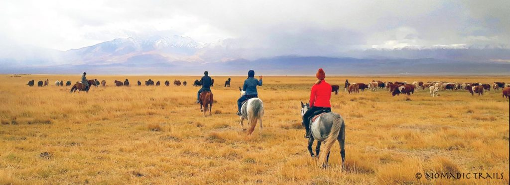 Horse riding group