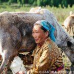milking reindeer at Dukha tribe camp
