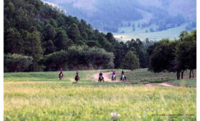 Horse galloping travelers in Mongolia