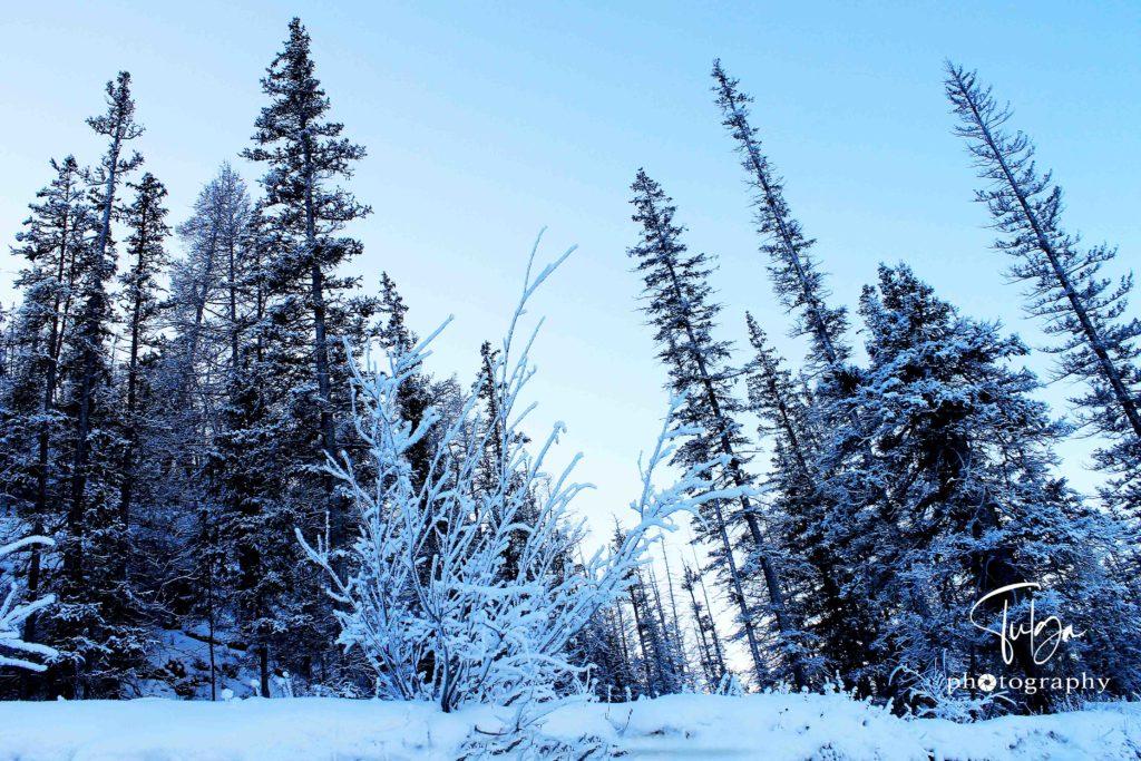 Winter wonderland Mongolia