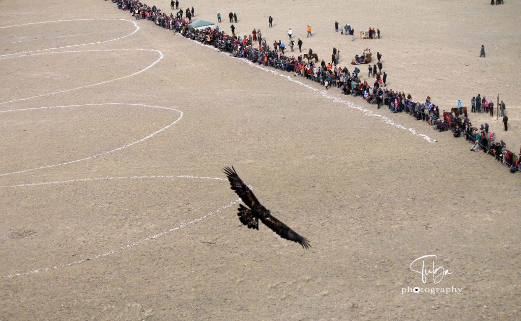 flying-eagle3