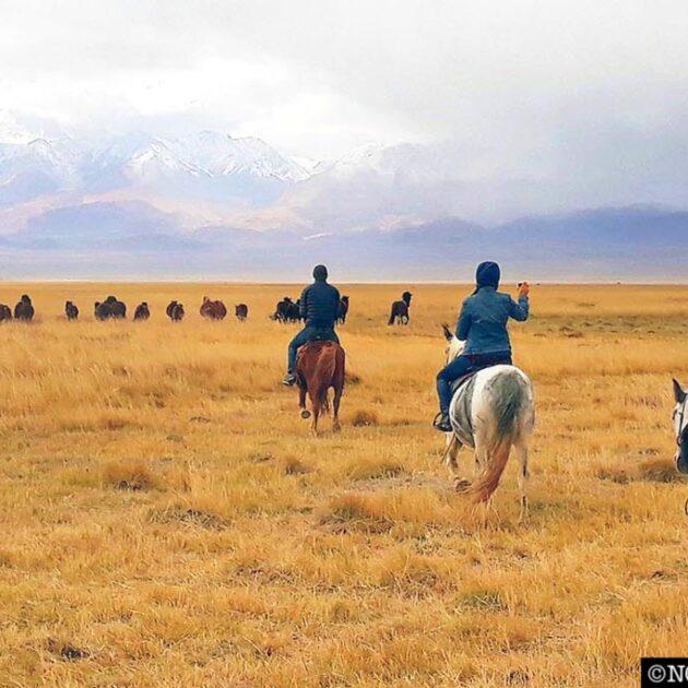 horse riding tour northern Mongolia