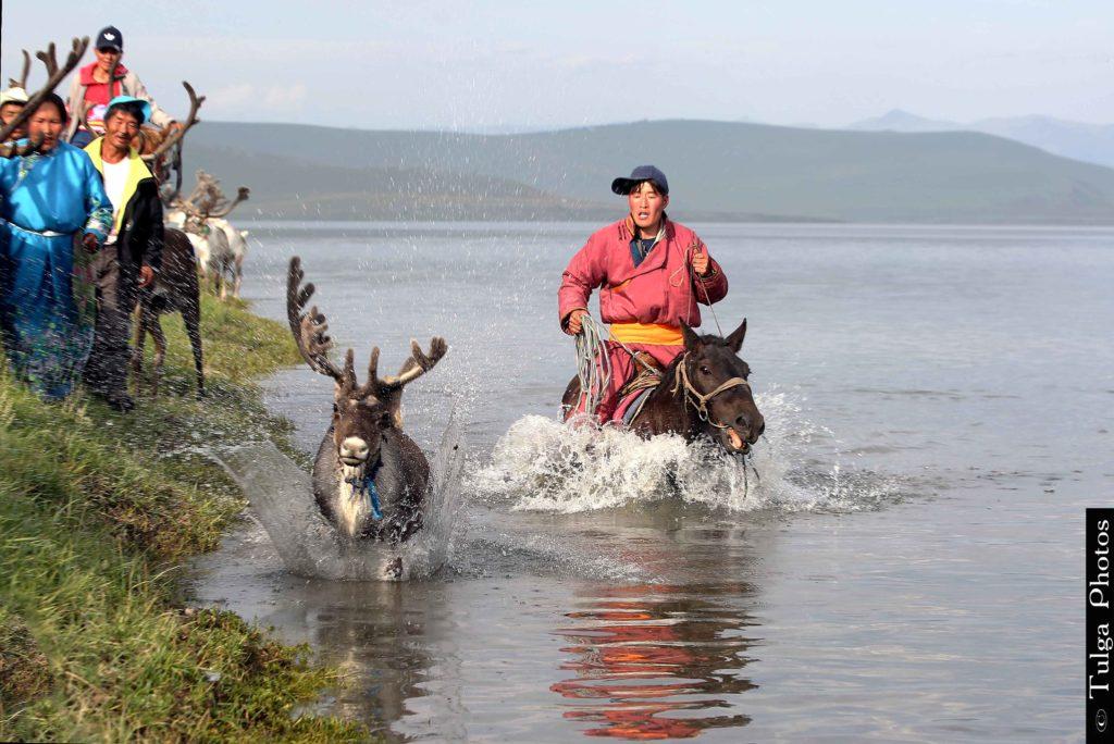 Reindeer Chasing in the water