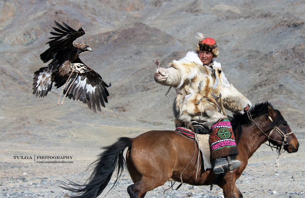 all you need to know about the Golden Eagle Festival, Hunter catching Eagle on arm