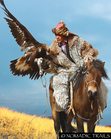 Golden Eagle Hunter with Eagle landing on arm