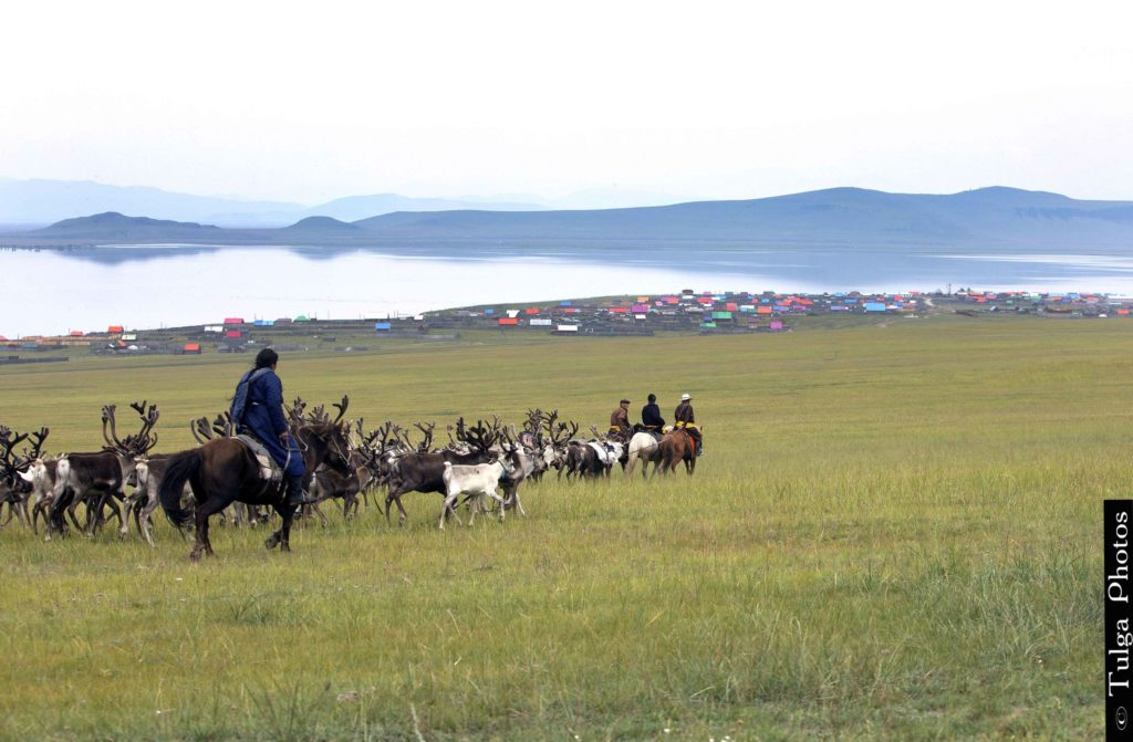 Almost to the Festival | Reindeer Festival Mongolia 2019 - Nomadic Trails