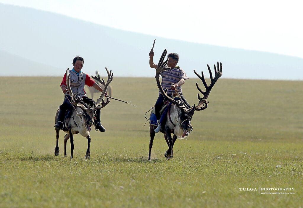 Giant antlers of a deer at 2019 Reindeer Festival