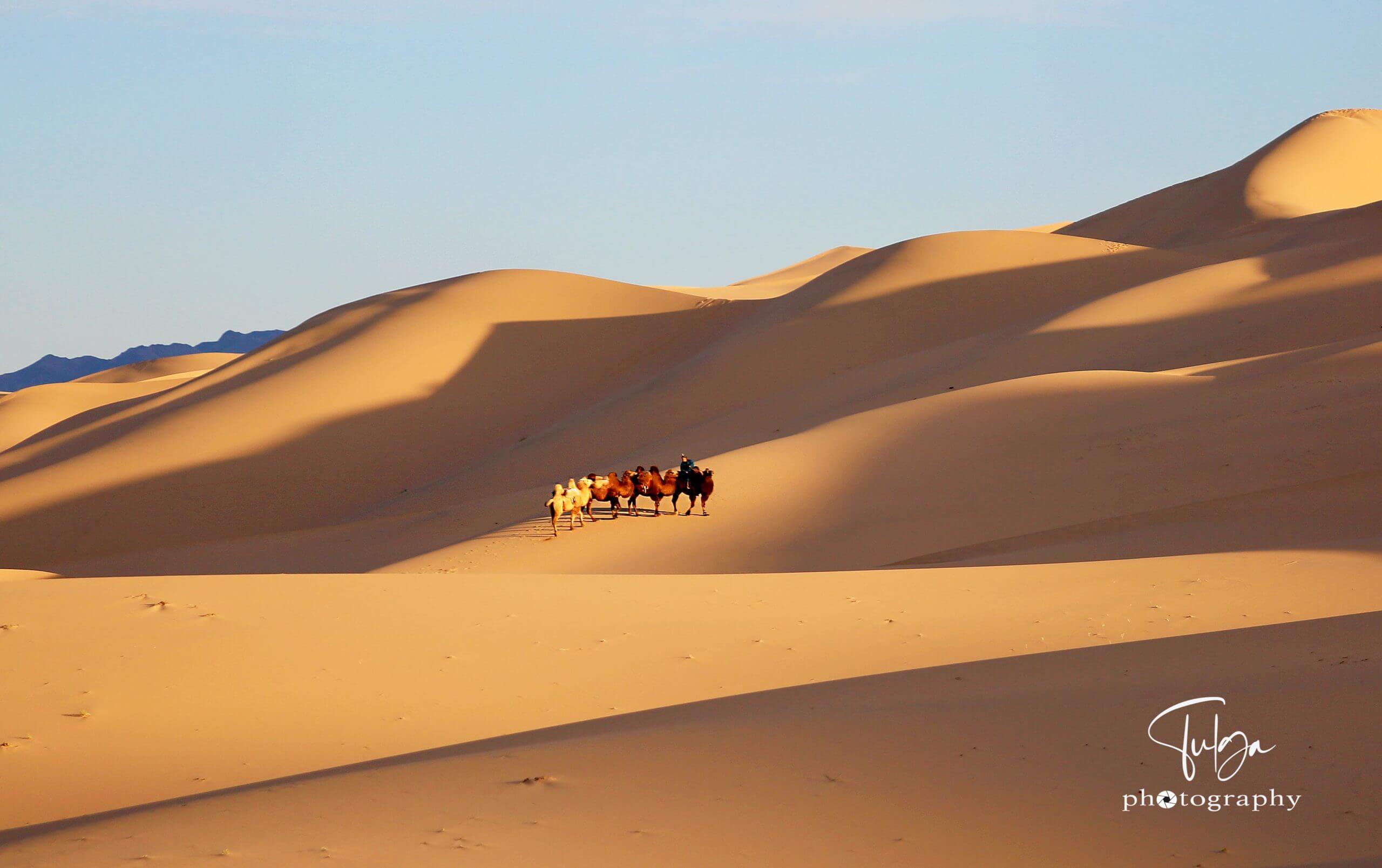 Mongolian gobi sunset with camel caravan