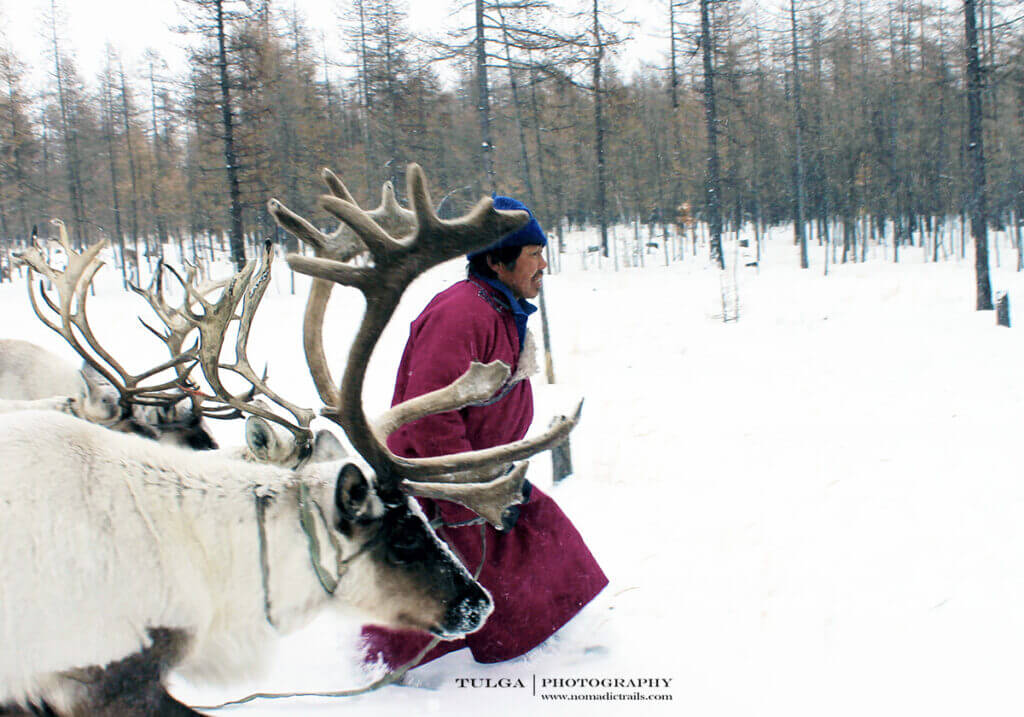 Man is walking with his reindeer in the heavy snow