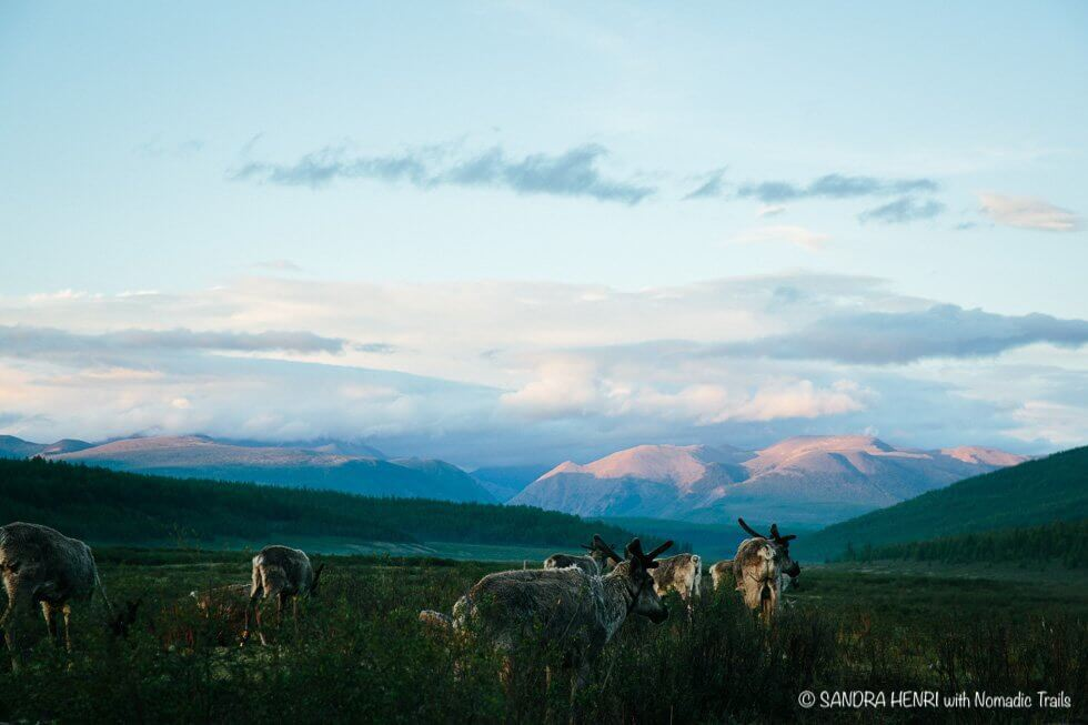 serene view at Taiga reindeer camp - by Sandra Henry blog about Dukha people in Mongolia