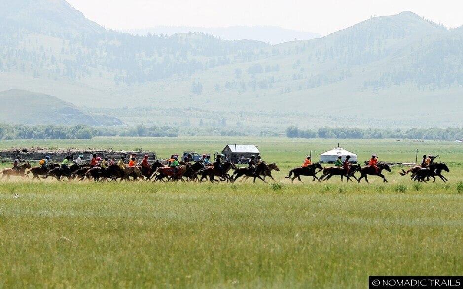 Amidst horse horse during Naadam Festival