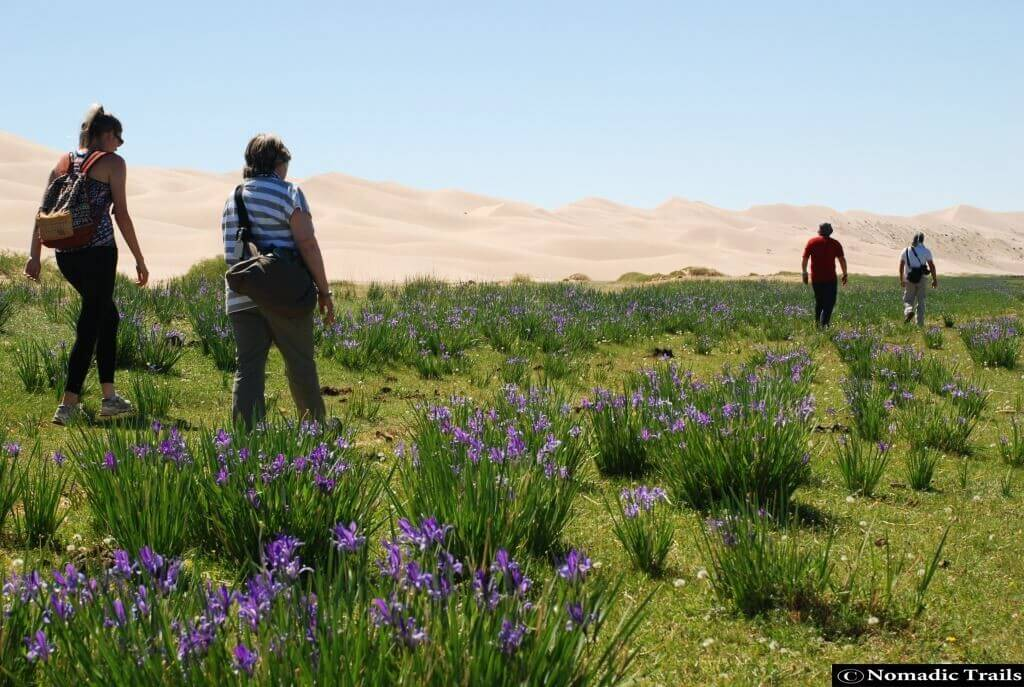 Clients walking in stunning dual scenery of the Golden Gobi