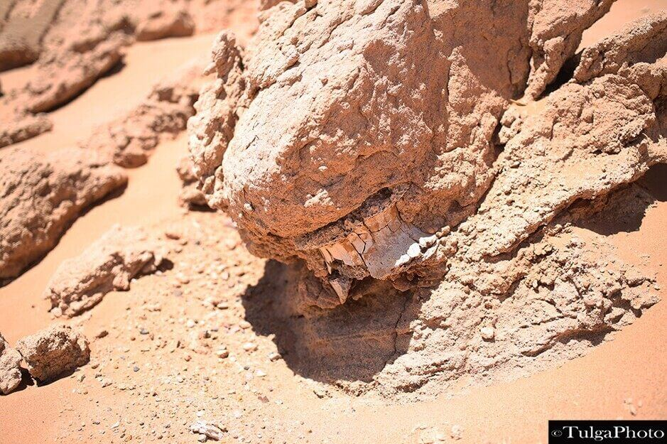 Fossil bone found in Mongolian gobi