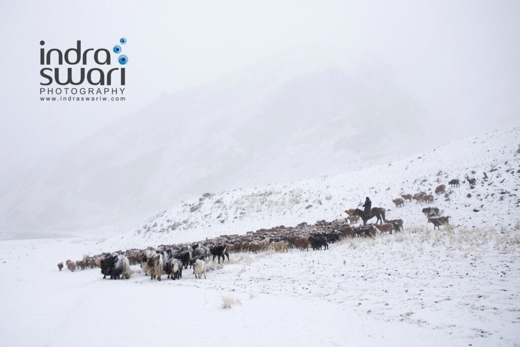 Herder caught in the storm - Indra Swari W