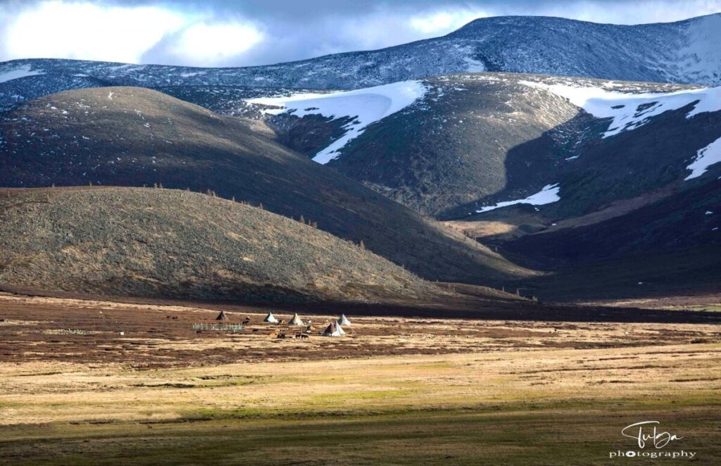 Spring camp of the Mongolian Reindeer Herders | How to visit the Mongolian Reindeer Herders - Nomadic Trails