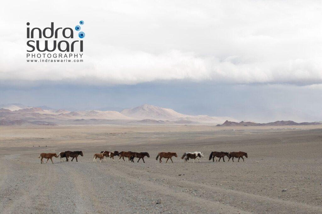 Steppe horses - Indra Swari
