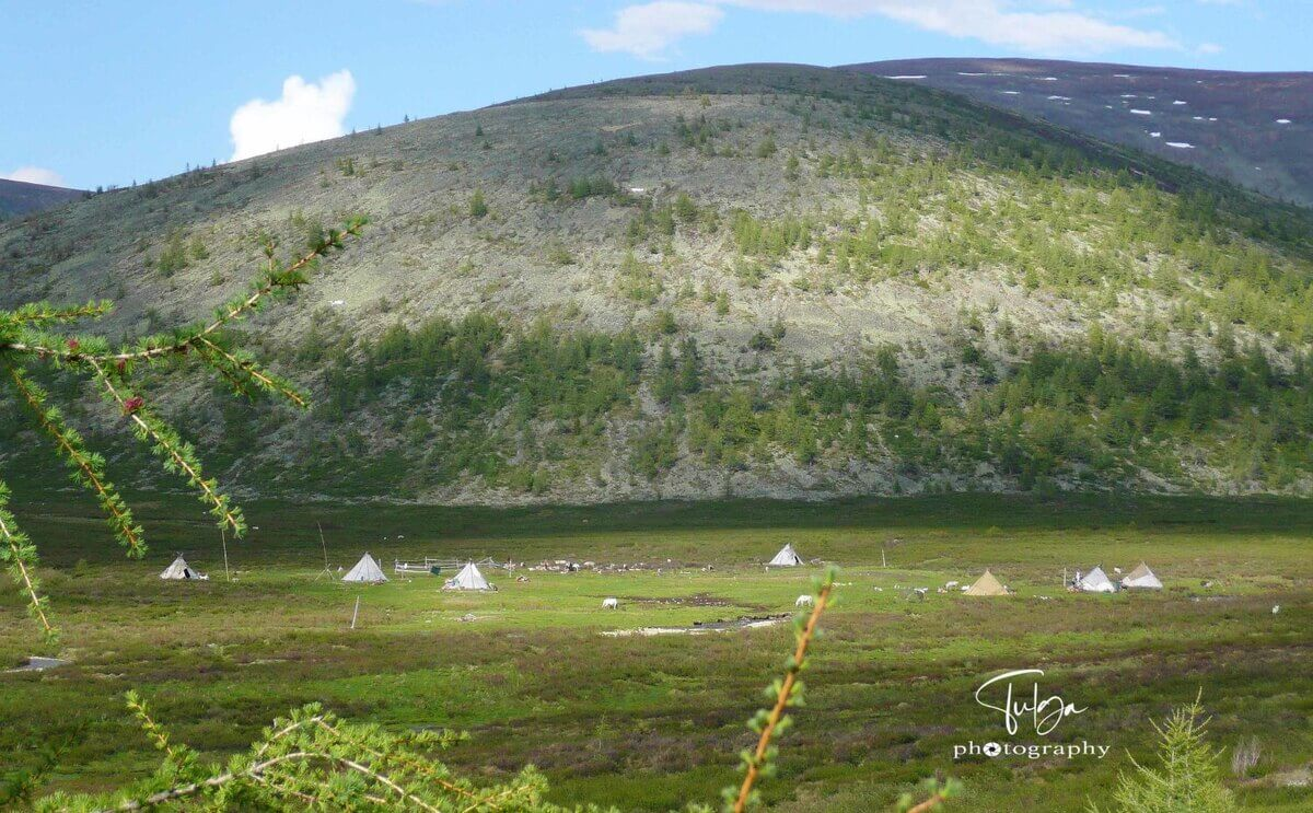 Summer camp of the Mongolian Reindeer Herders in Taiga